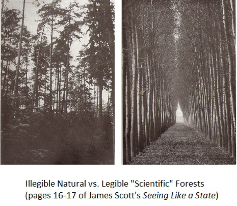 Illegible Natural vs. Legible 'Scientific Forests', pages 16–17 of James Scott's Seeing Like a State